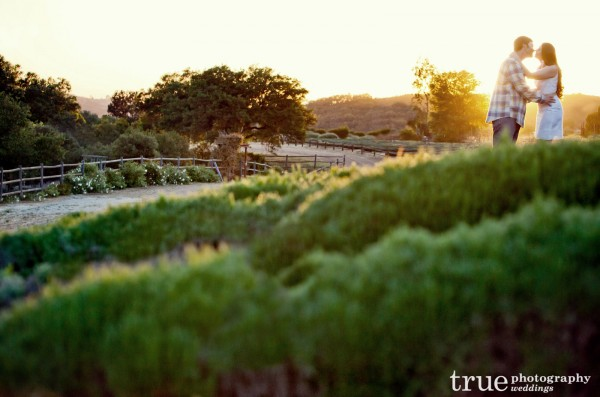 Engagement-Photos-at-Keys-Creek-Lavendar-Farms-