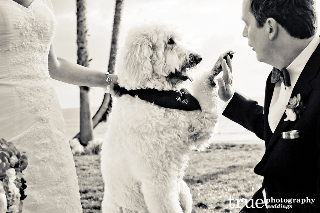 Dog-in-a-wedding-on-the-beach