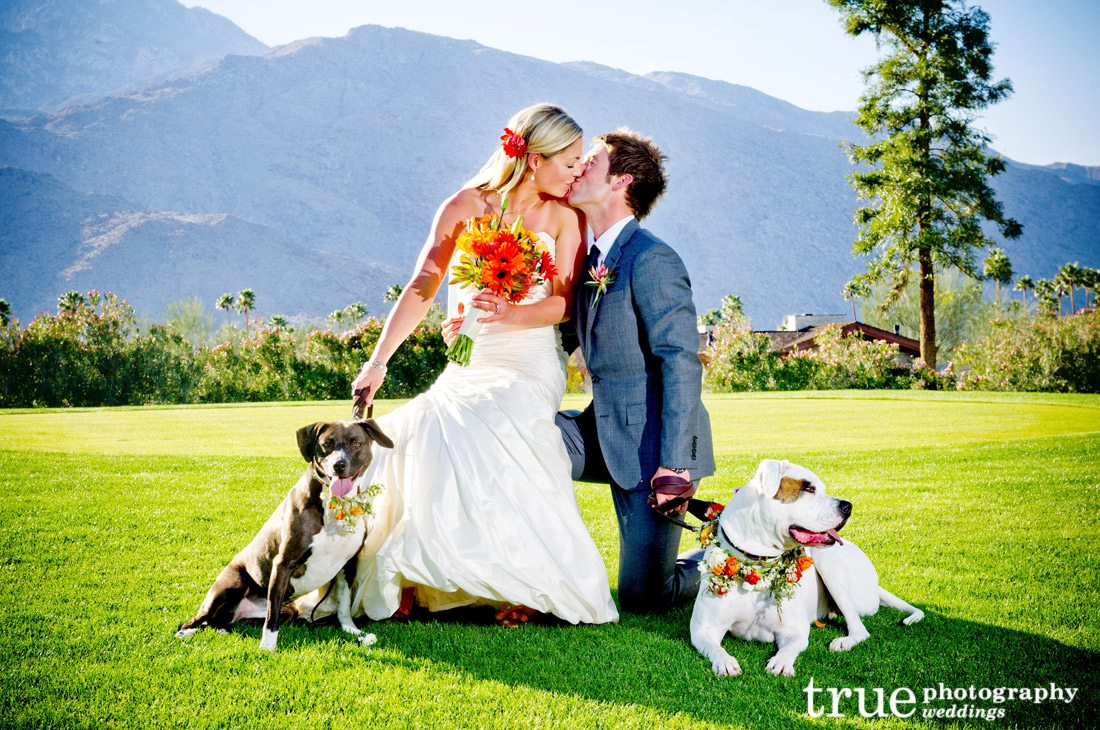 Bride-and-Groom-with-Dogs