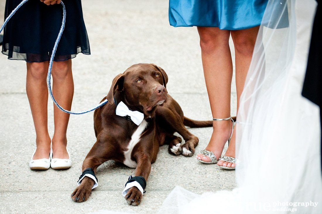 Dogs-at-Weddings-