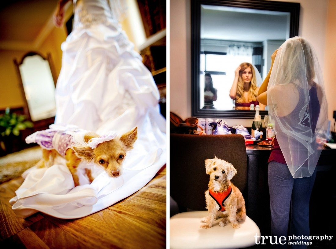 Dogs-with-bride-at-wedding