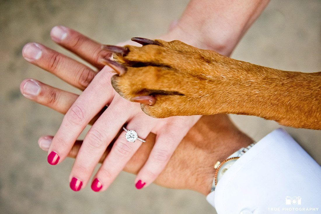 photo of engagement couple and dog paw