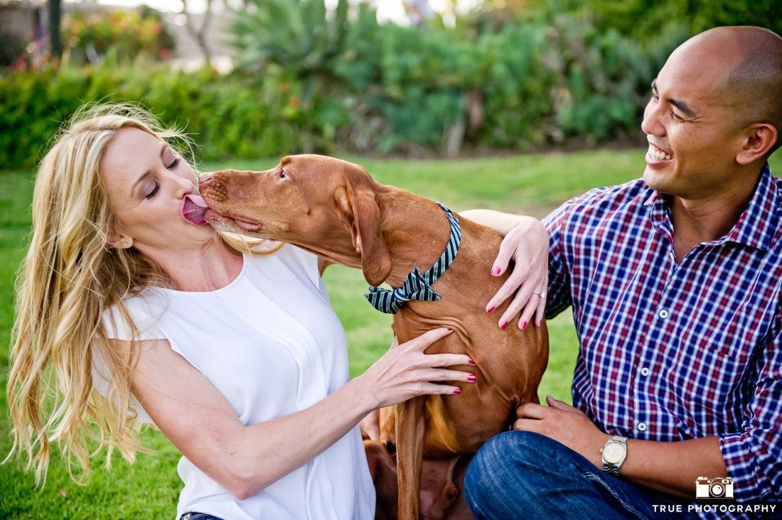 dog kissing bride to be engagement shoot