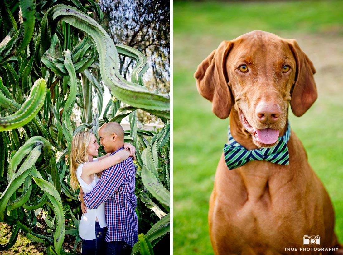 dogs at Balboa Park