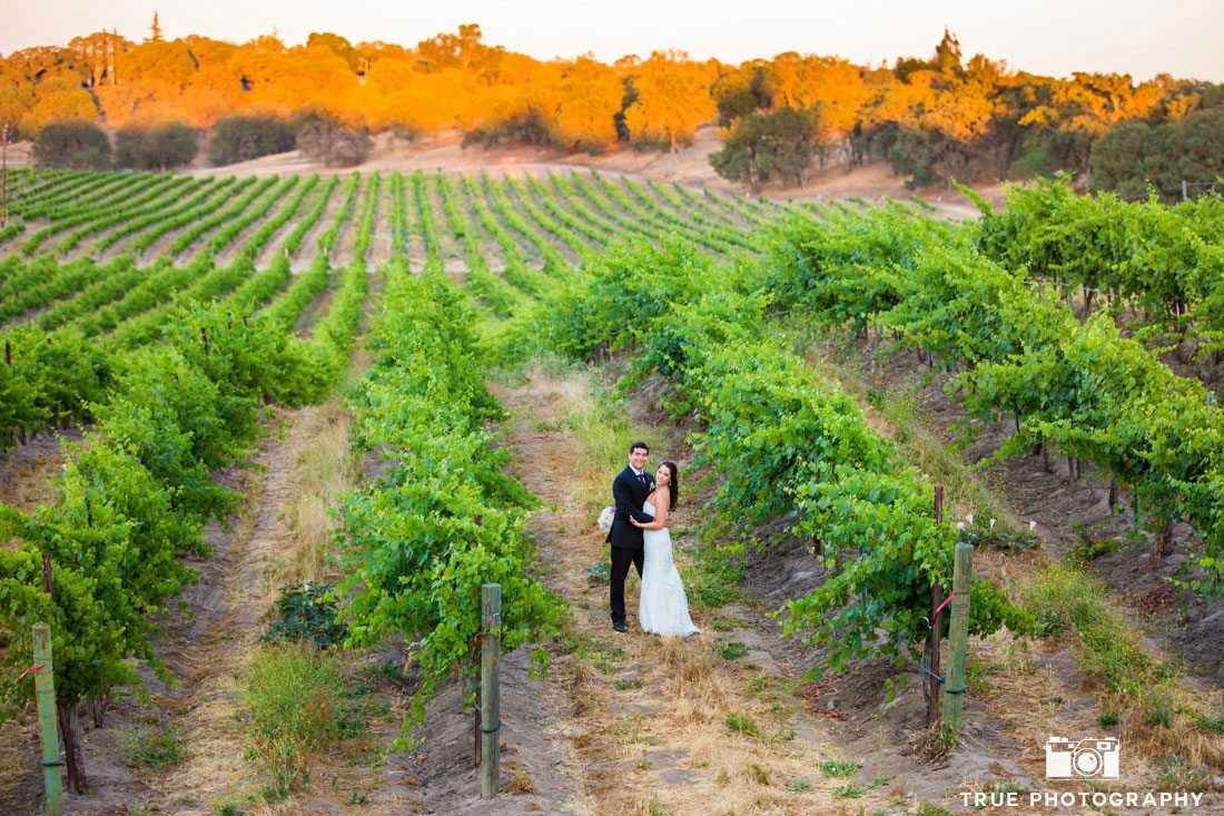 Panoramic view of bride and groom amongst vineyard at Calipaso Winery