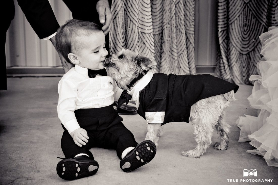 Cute terrier dog kisses baby