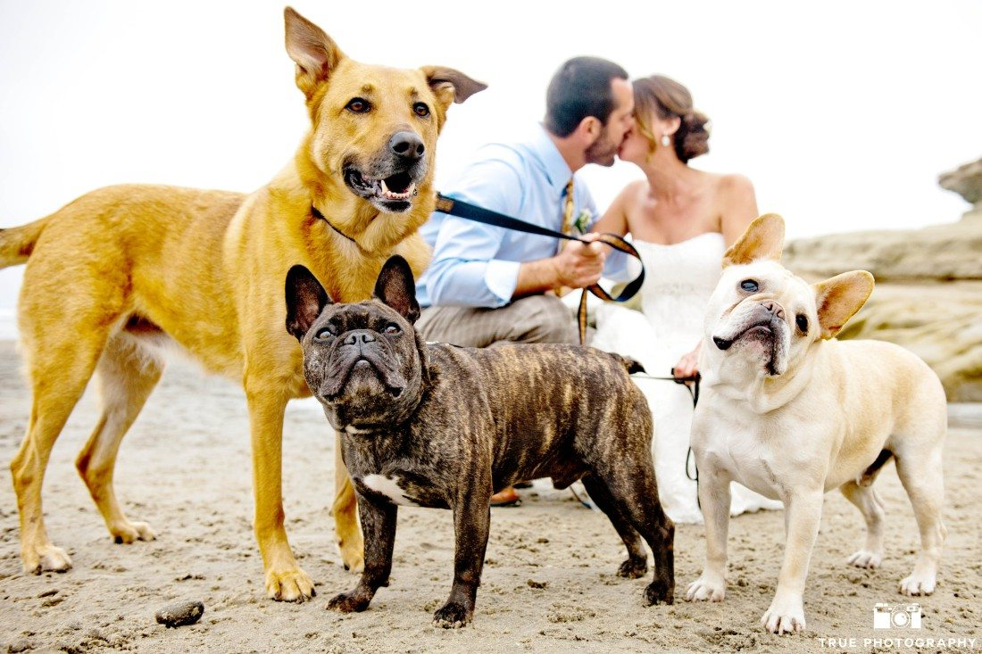 Bride and Groom portraits with dogs