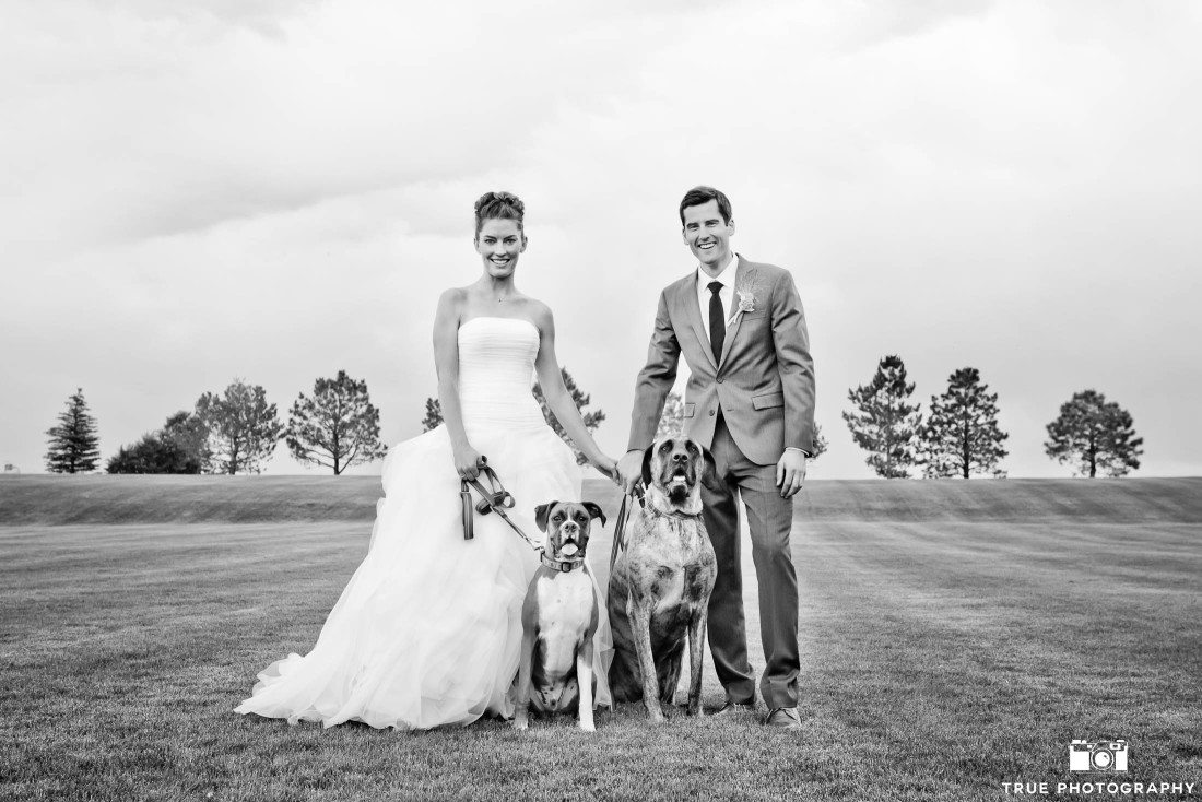 Wedding photos with Boxer and Mastiff