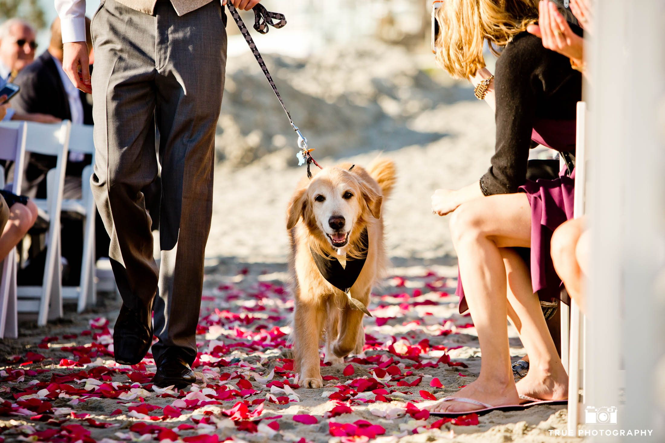 Coronado wedding ceremony with dog walking down the aisle
