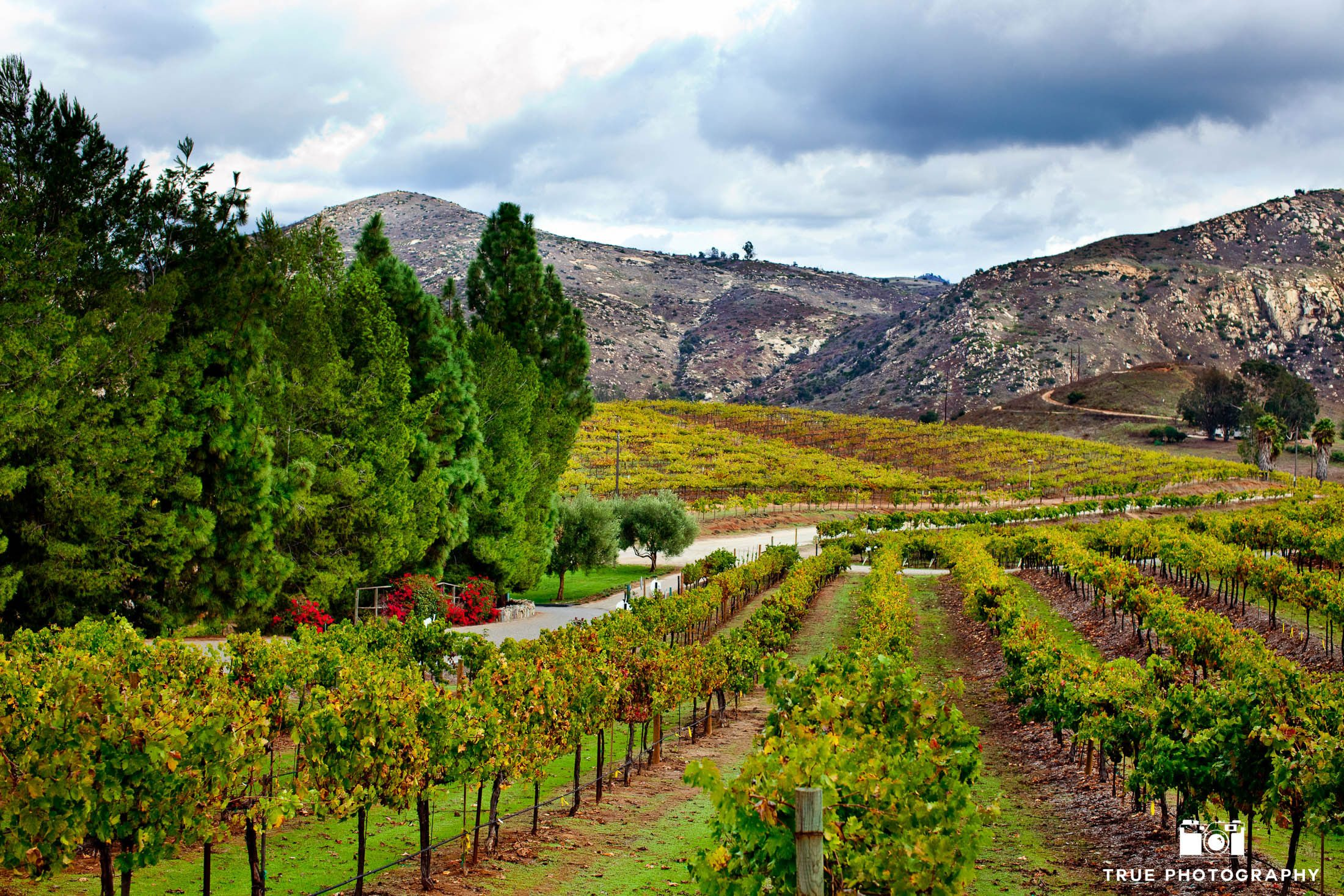 Gorgeous view of mountains and vineyard at Orfila Winery