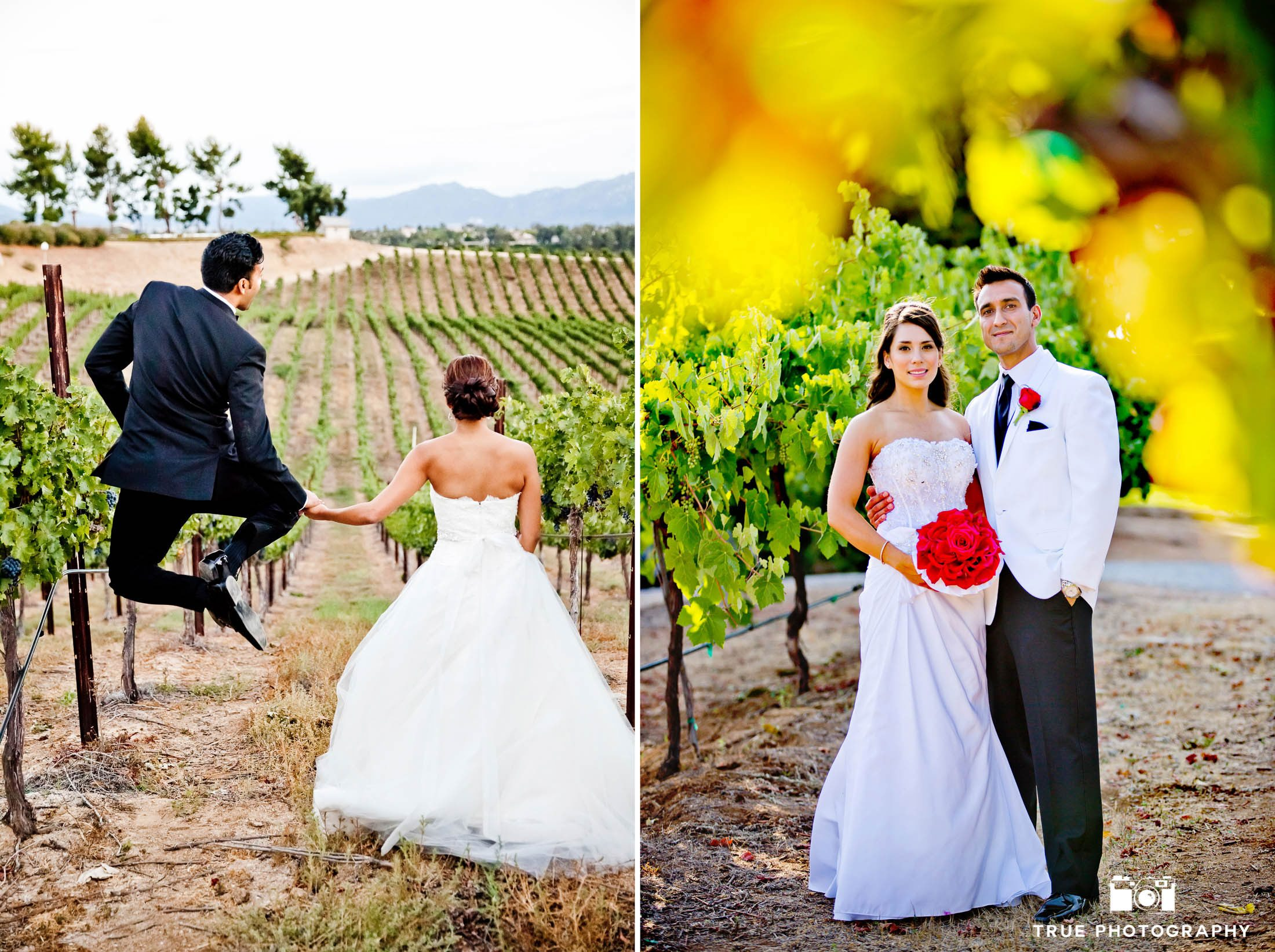 Couples celebrate and pose for photos after vineyard ceremony