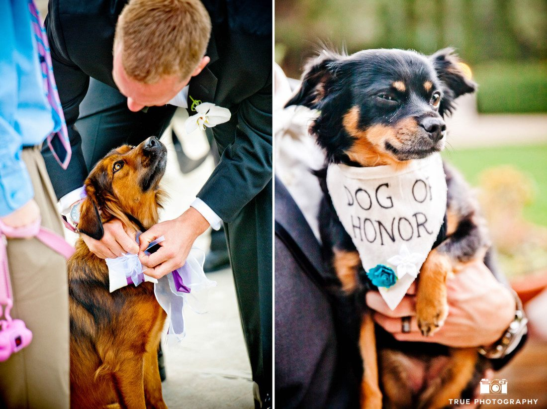 Dog as a ring bearer and dog of honor