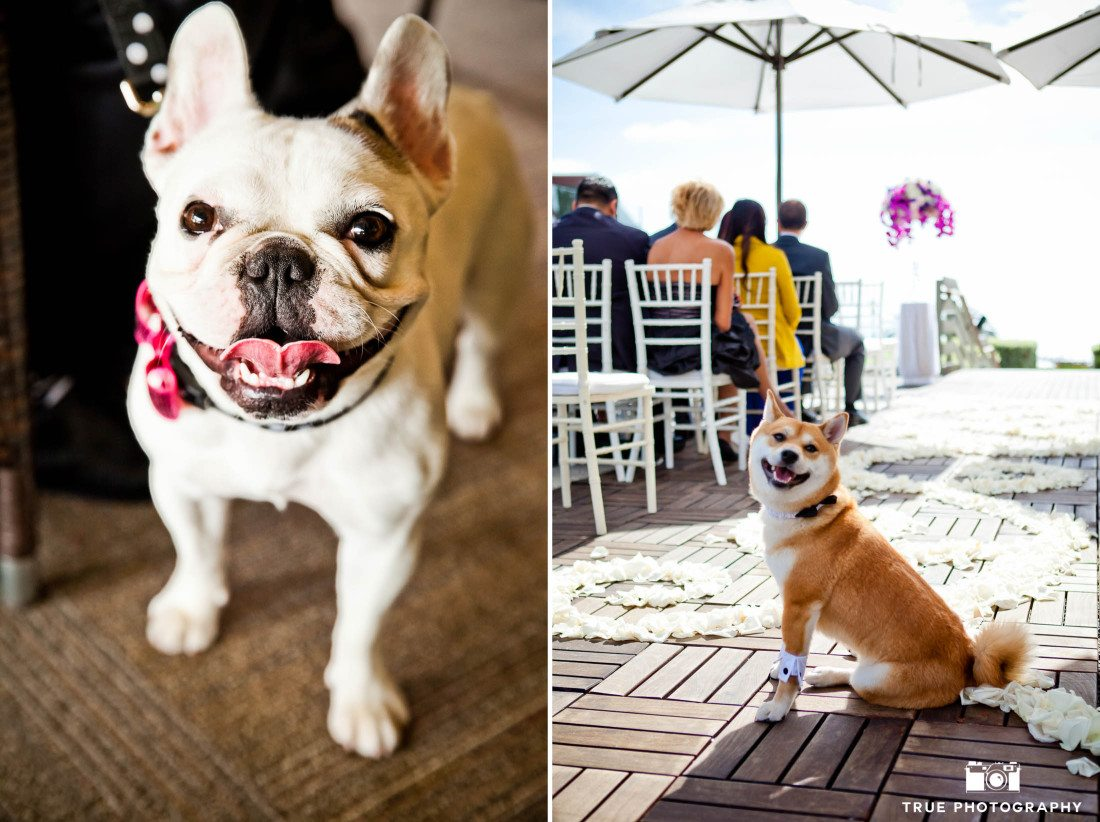 Dogs in wedding clothes