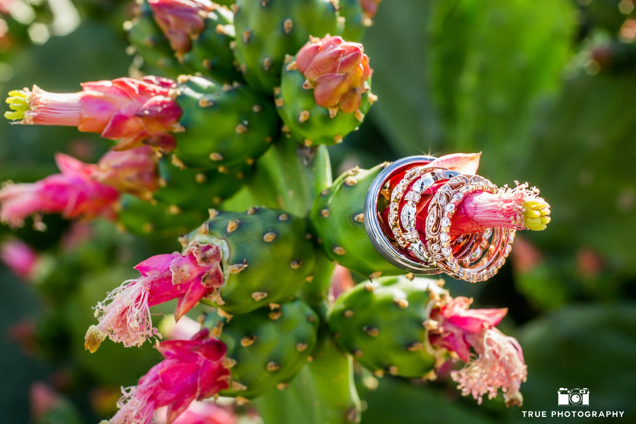 Creative Couple's Rings Photo on green and pink cactus