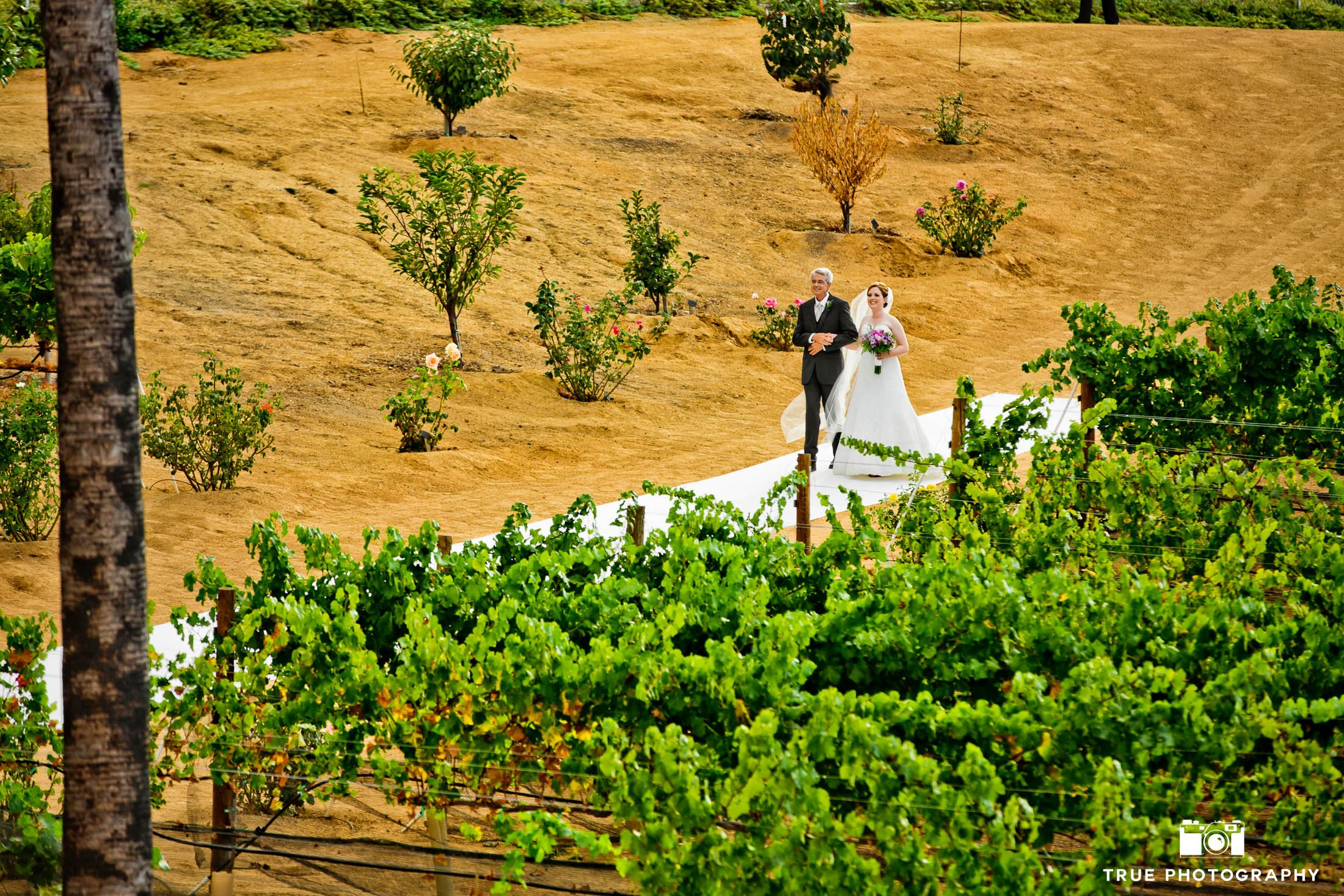 Dad holding hands with Bride as they walk down the aisle at vineyard ceremony