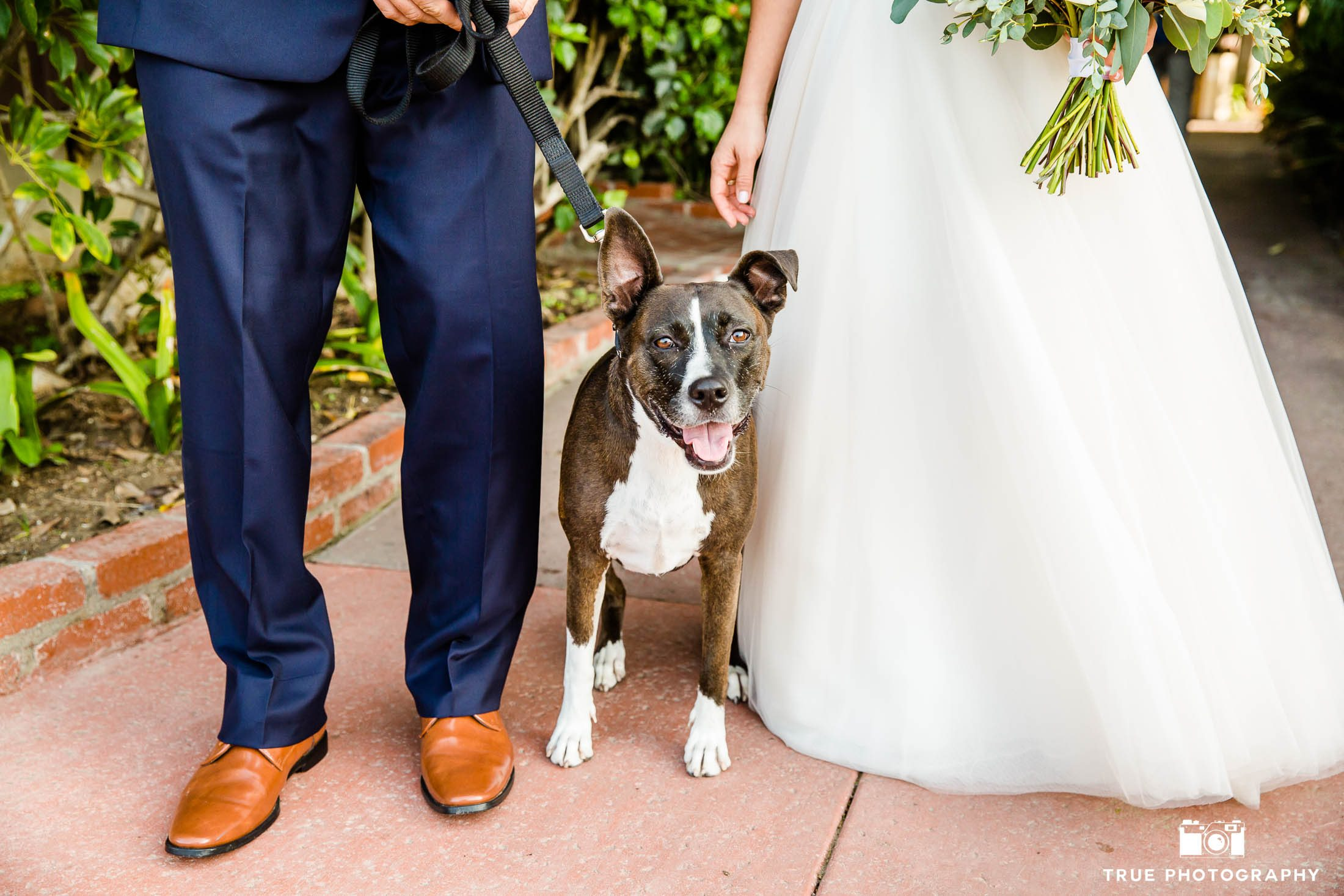 Bride and Groom with cute dog on wedding day