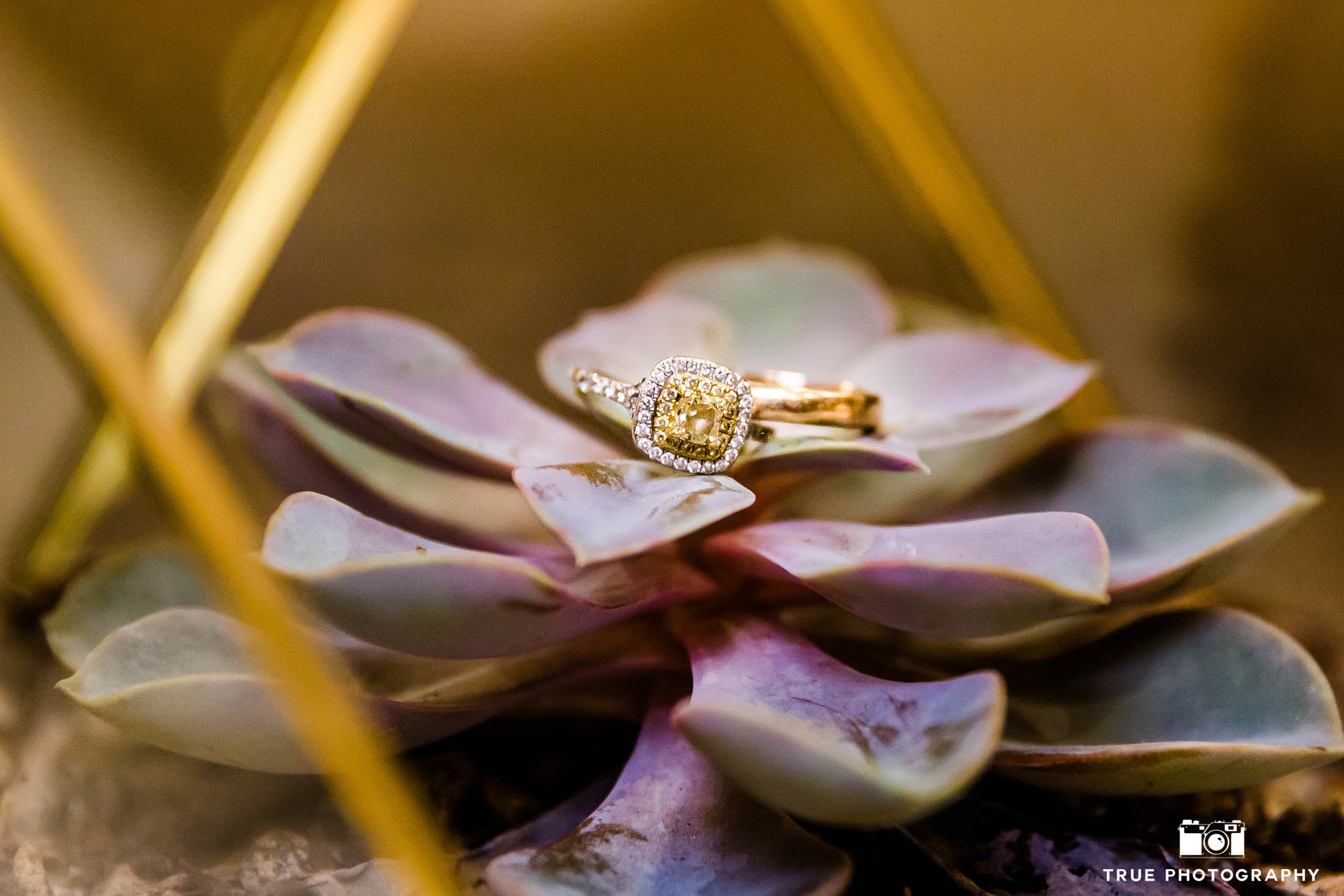 Bride and Groom's gold band and yellow diamond wedding rings