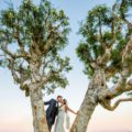 bride and groom kissing in a tree with pretty sunset in background