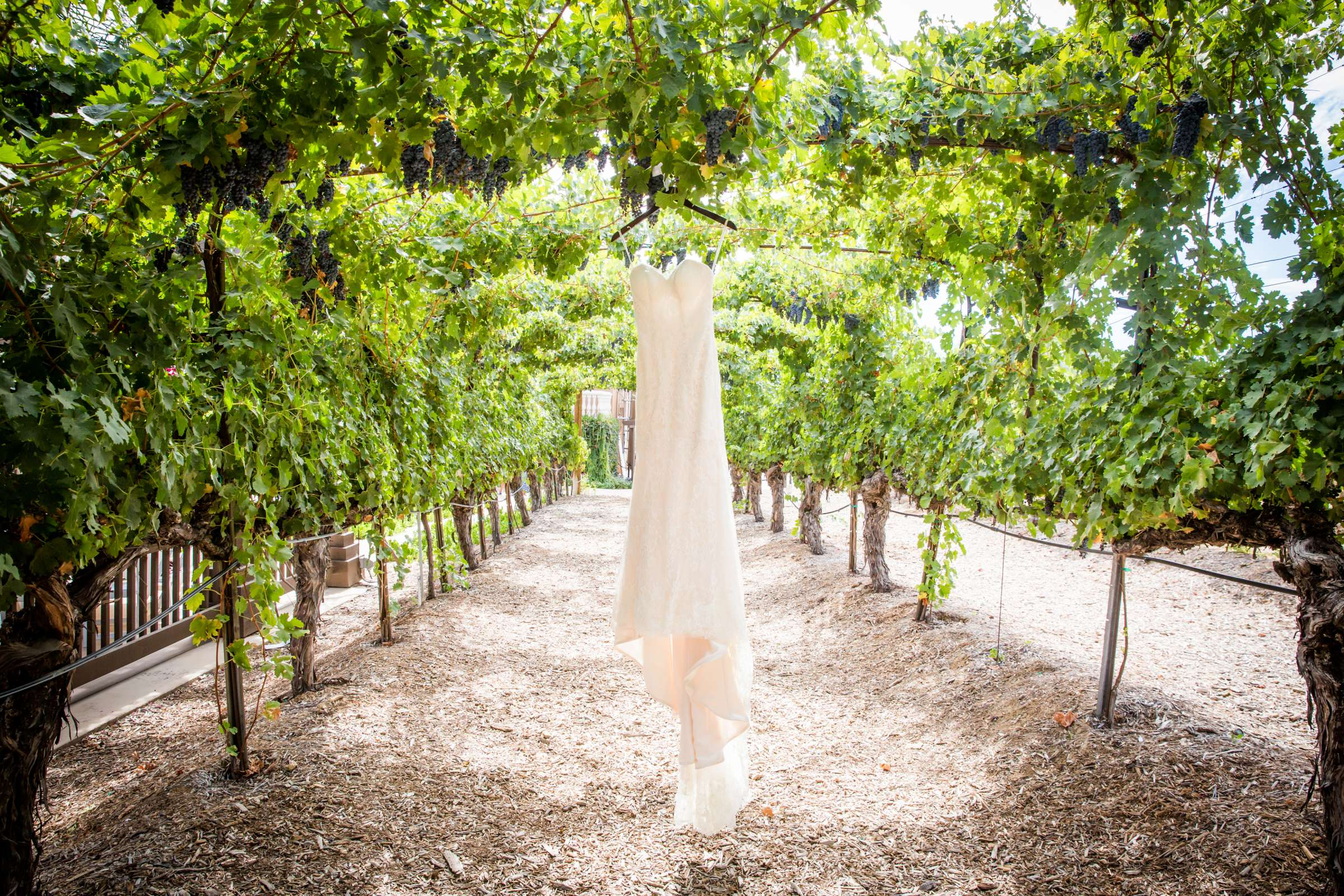 Wilson Creek Winery Wedding, Quynhnhi and Jacob Wedding Photo #22 by True Photography