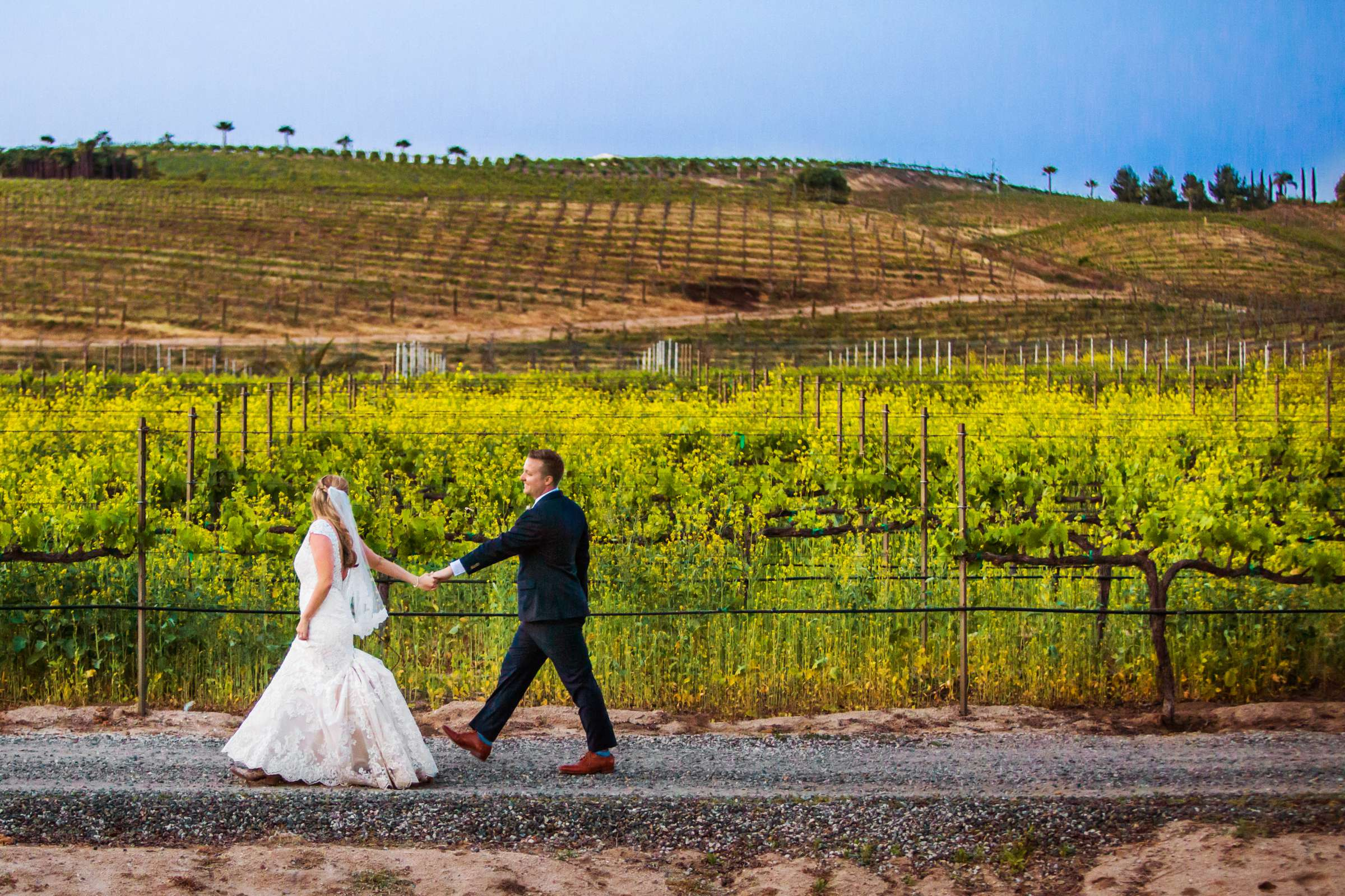 Peltzer Winery Wedding, Jaclyn and Nick Wedding Photo #140 by True Photography