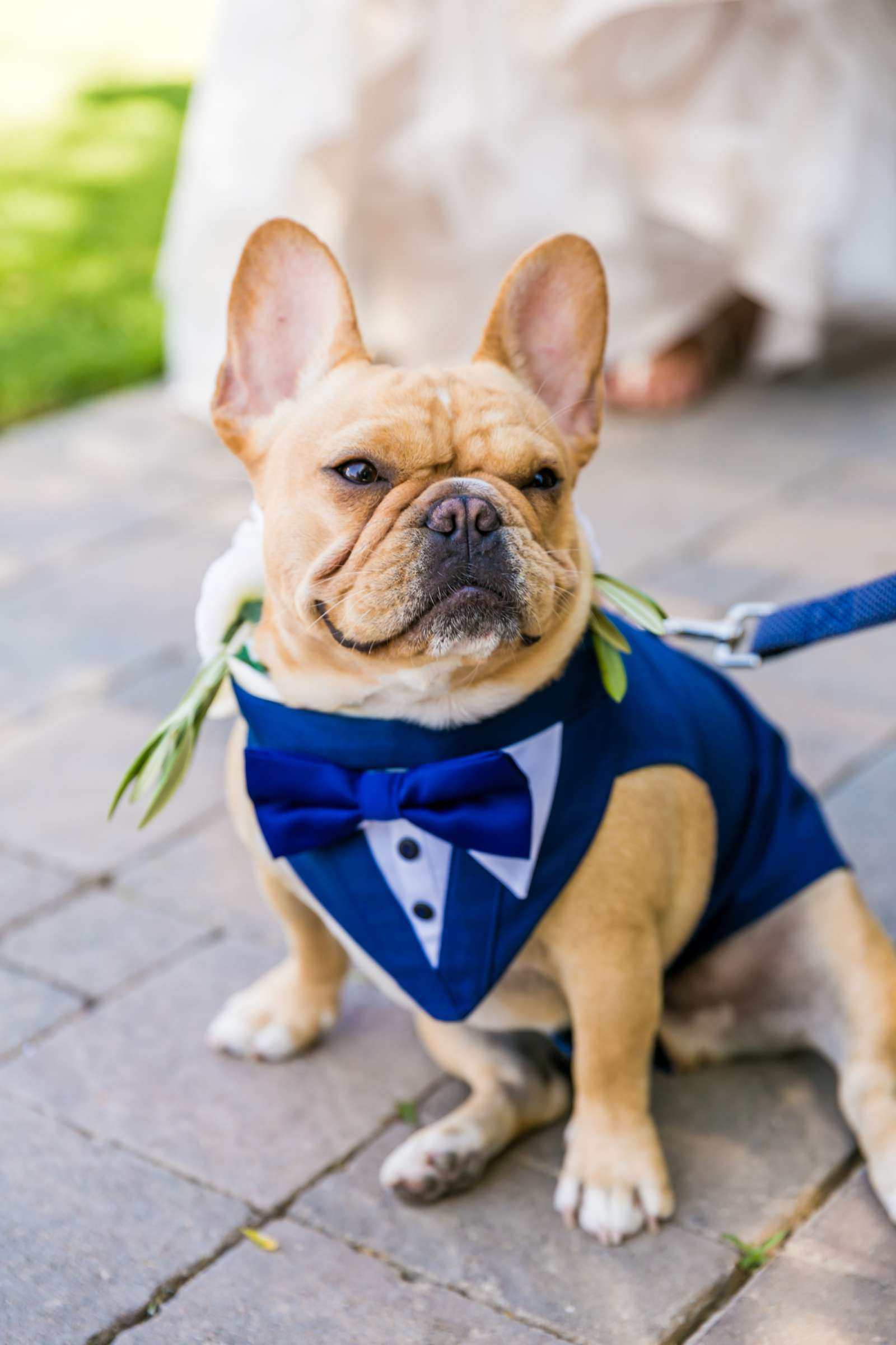 Pets at Mount Palomar Winery Wedding, Meg and Eric Wedding Photo #477473 by True Photography